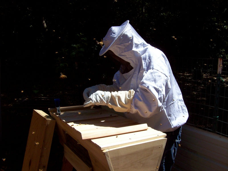 Getting started with beekeeping - with Vickie from Making Our Sustainable Life