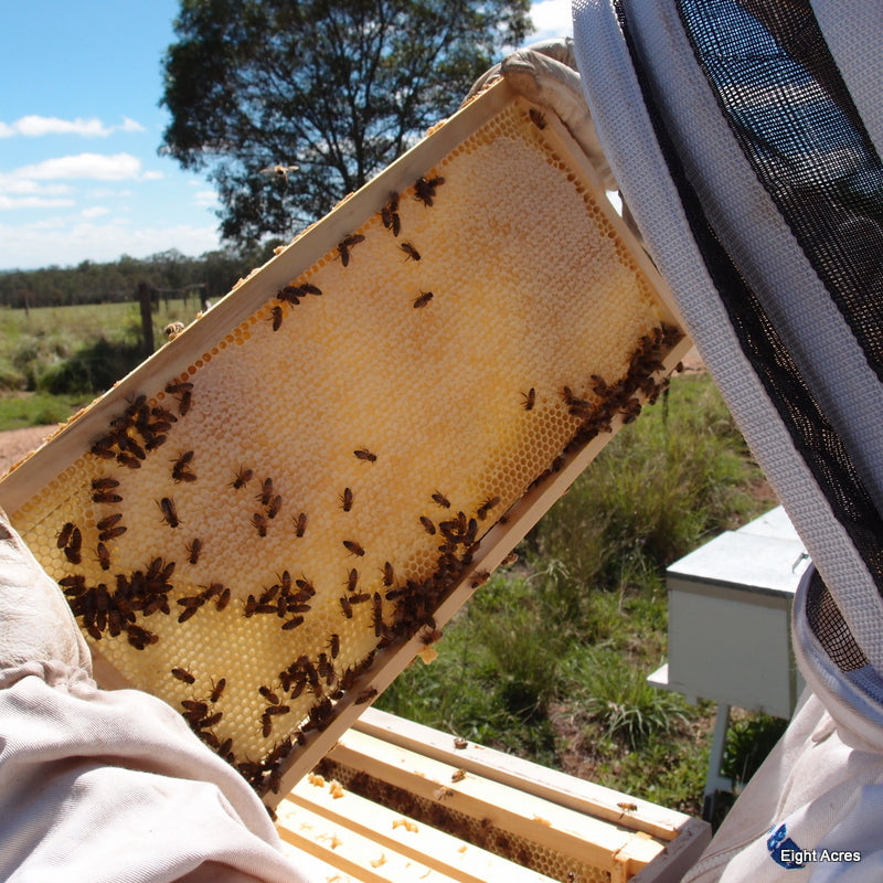 Beekeeping - boom and bust