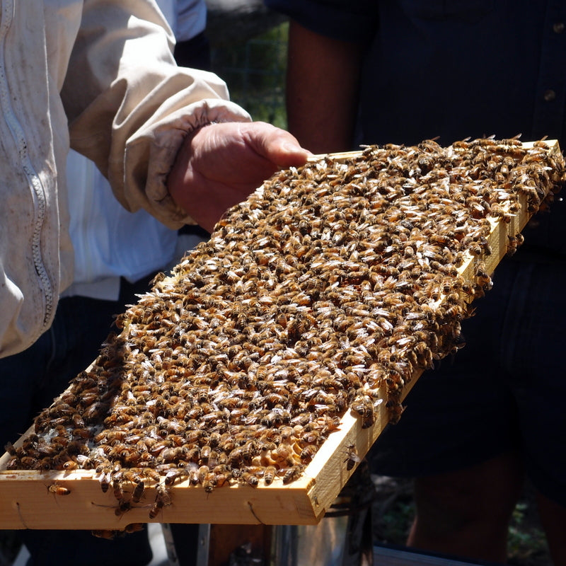 Seven random facts about beekeeping - plus books and resources