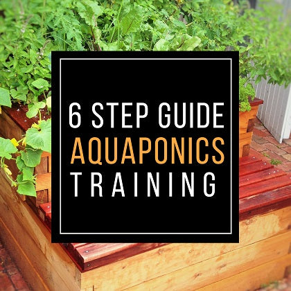 Six Step Guide Aquaponics Training