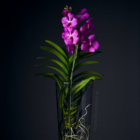 House of Orchids Luxury Flowers London