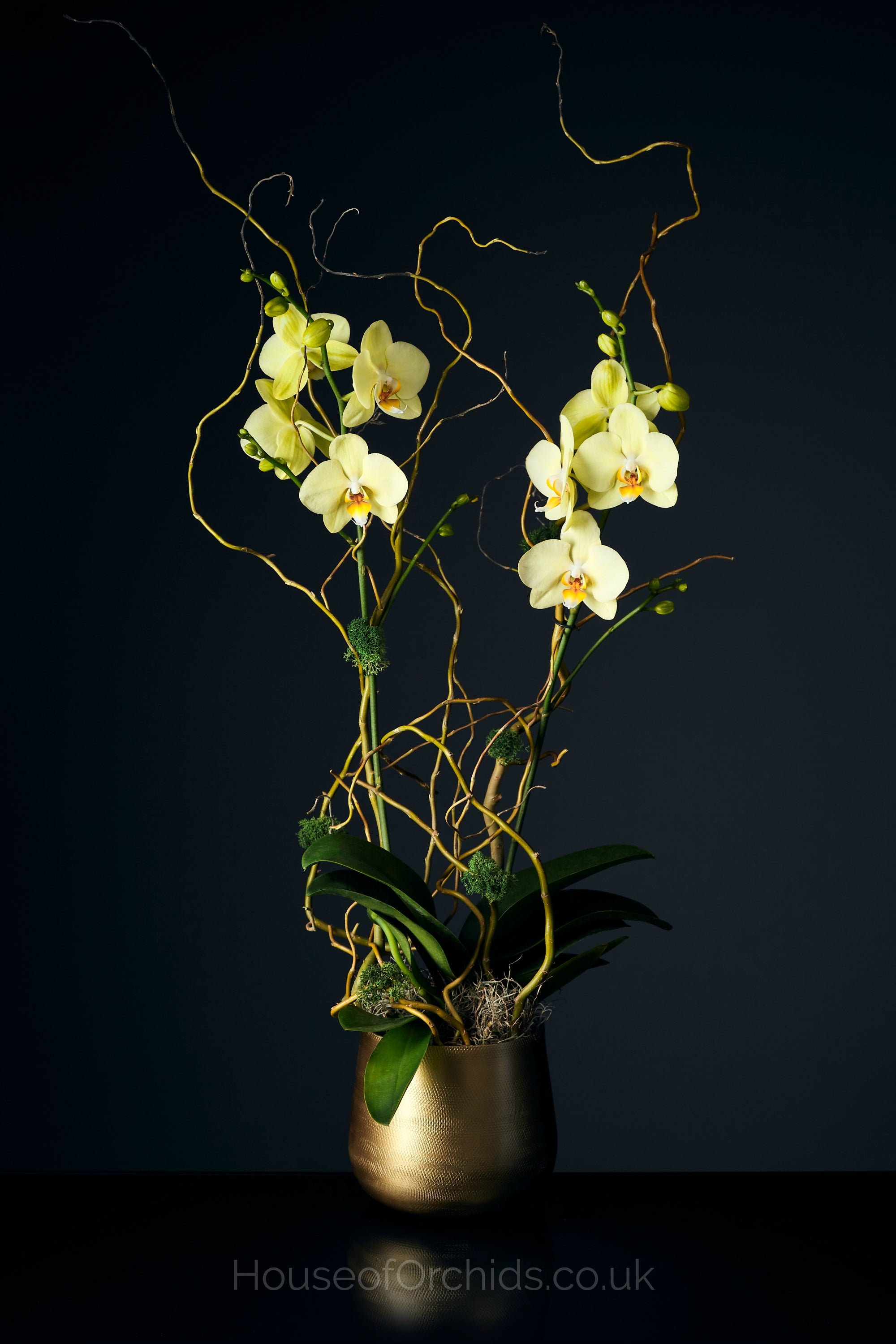 House of Orchids London - Luxury Orchid Delivery
