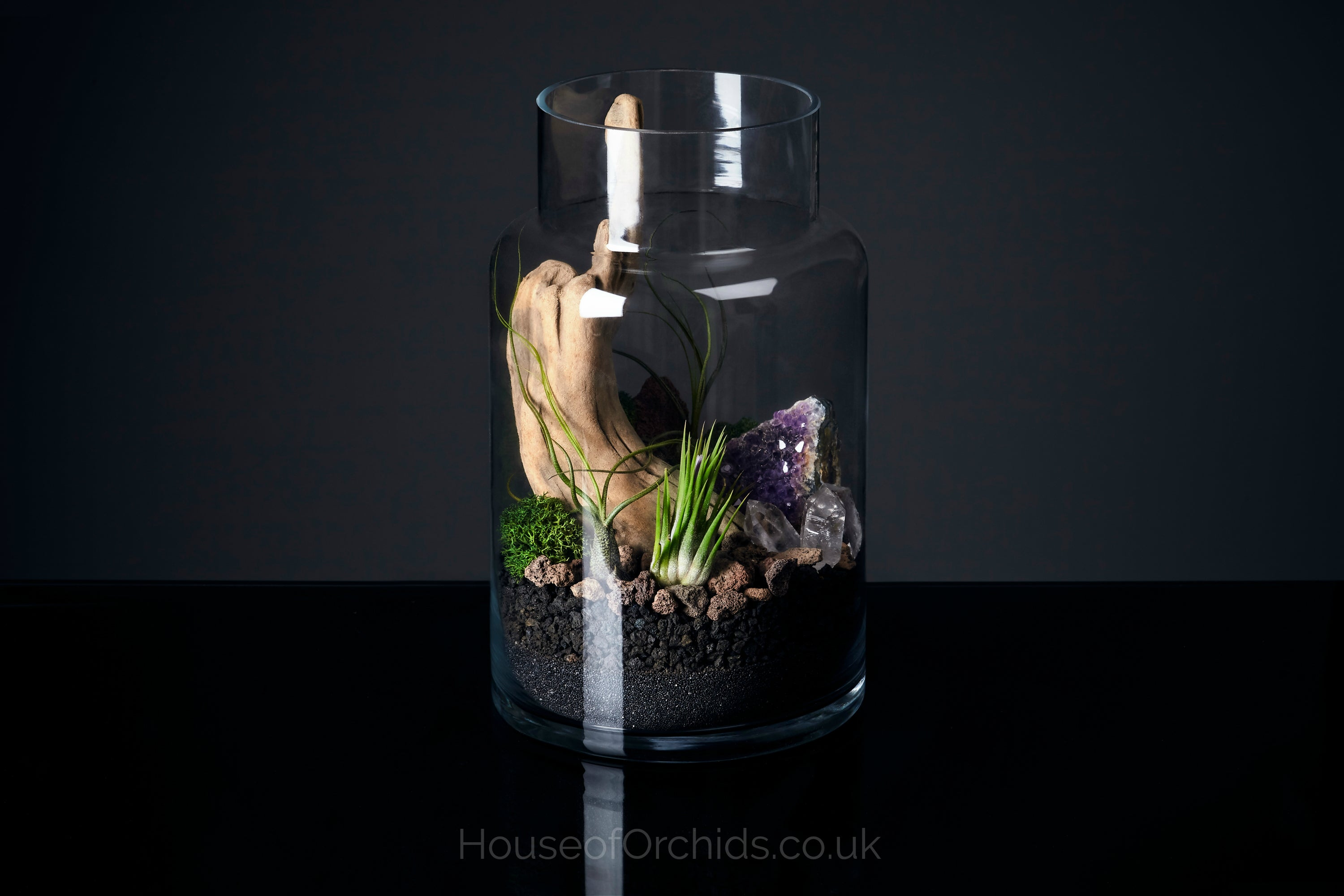 Cosmic Airplant Terrarium House Of Orchids