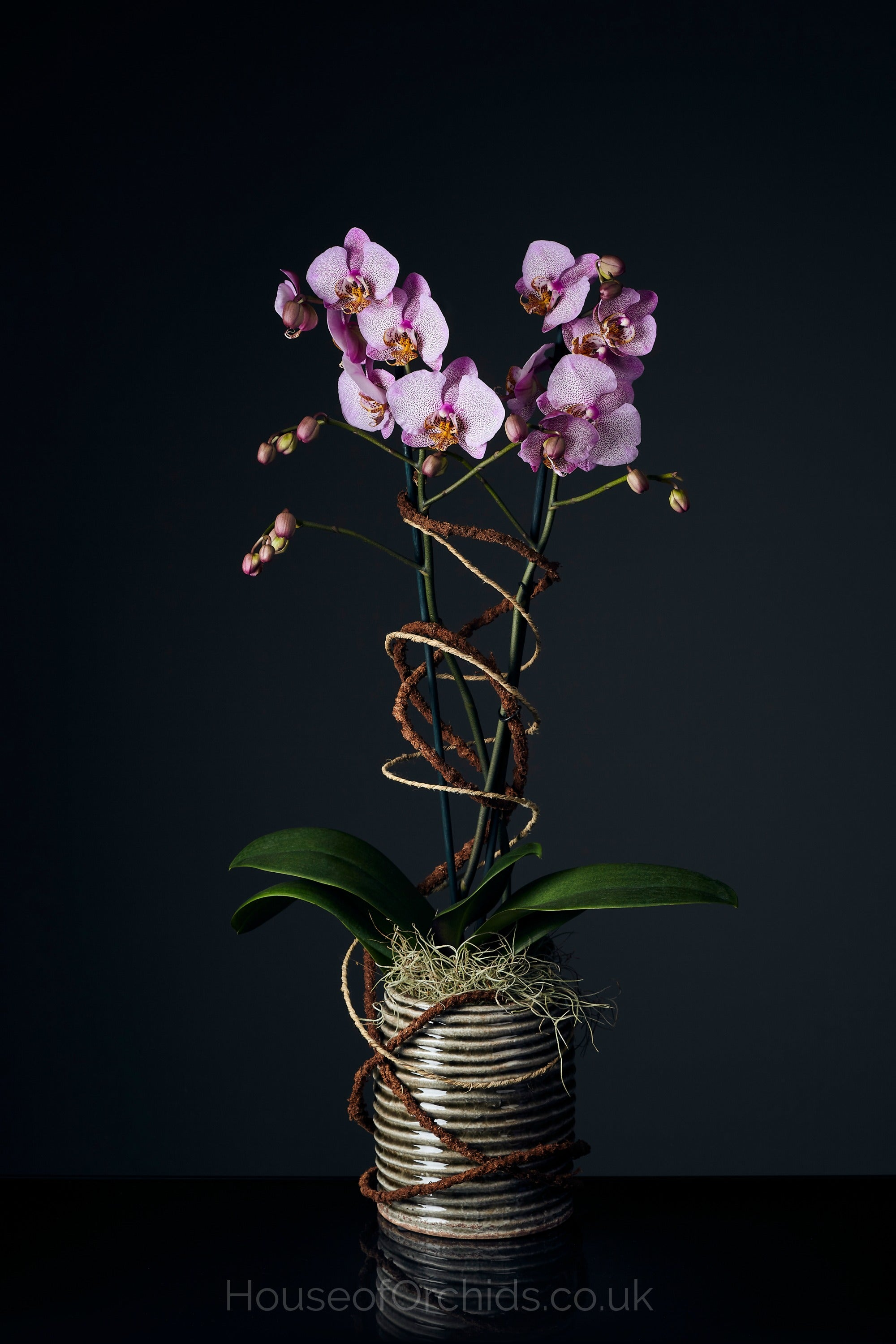 House of Orchids London - Luxury Gift Orchids for London Delivery
