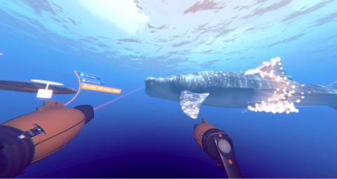 Operation Apex - scanning whale shark