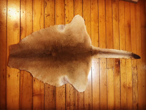Kangaroo Hide - Large