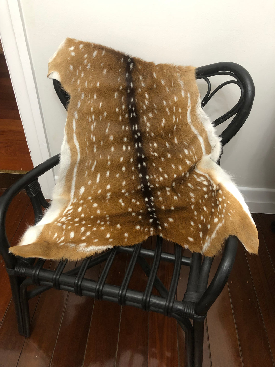 Deer Hide Chital