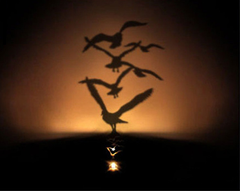 Bird Flock Shadow LED Light
