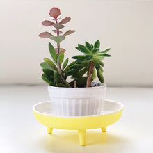 yellow speckled legged porcelain catchall photo with small plant