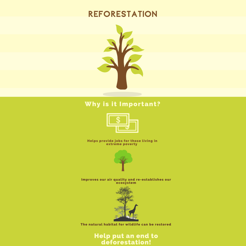 REFORESTATION - WHY IS IT SO IMPORTANT?