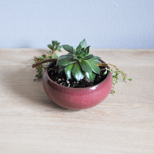 Small Ceramic Flower Pot