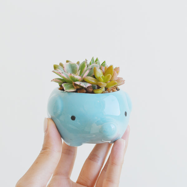 Animal Potted Succulent (Elephant)
