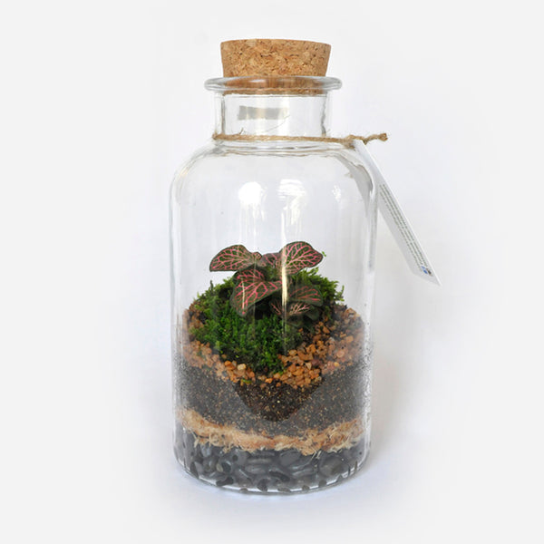 Cork Jar Terrarium 550ml