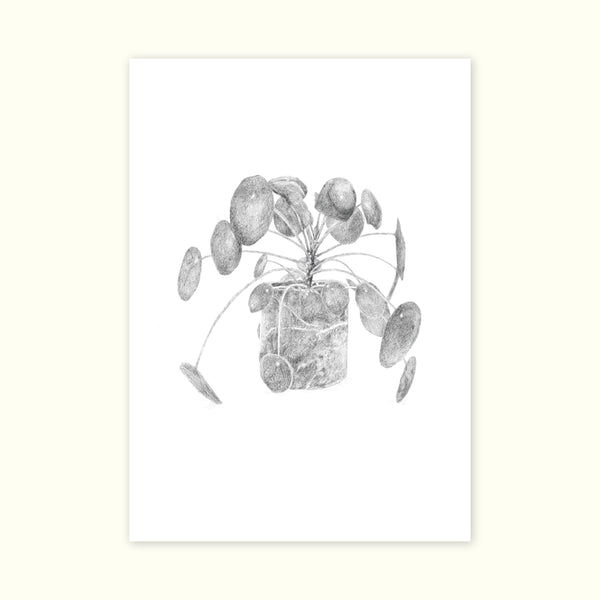 A3 Print of Pilea Peperomioides from the Nature is Grand Botanic Series