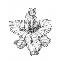 Tiger Lily Botanical Illustration