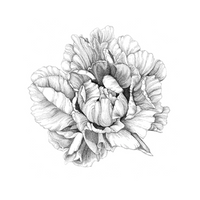 Camellia Botanical Illustration