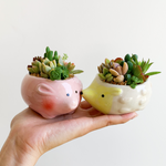 Animal Potted Succulent (Pink Mouse)