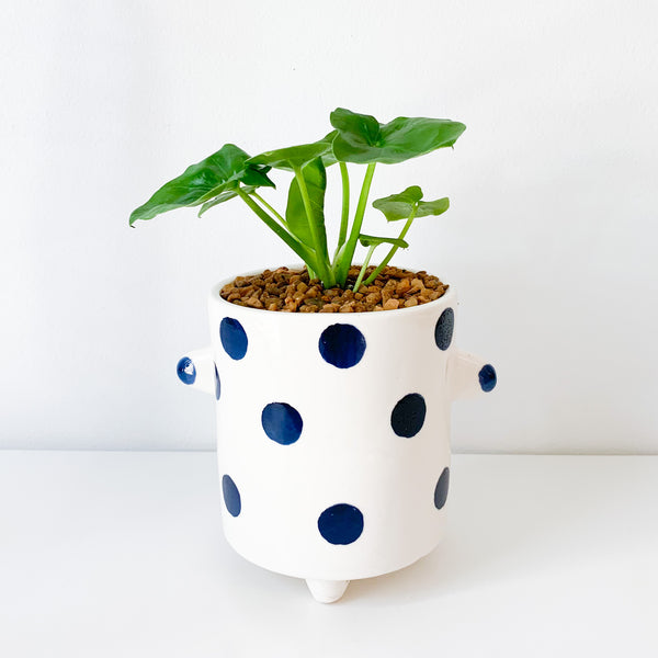 Philodendron Super Atom in Spotted Ceramic Pot