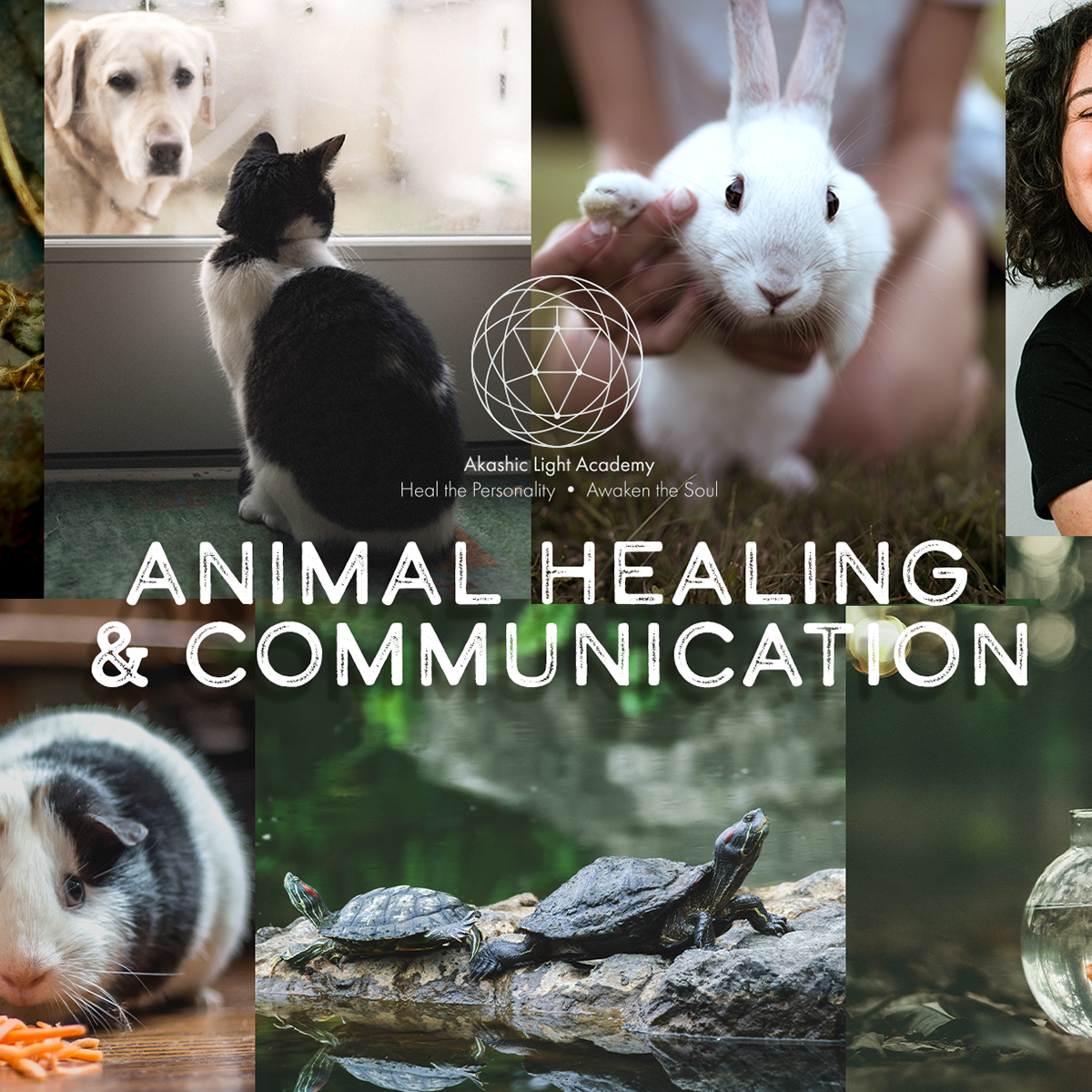 Animal Healing & Communication