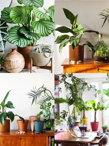 4 picture collage of house plants in funky pots that are different colours, shapes & sizes – plants include Dragon Tree, Fiddle Leaf Fig Tree, Monstera Deliciosa, Ponytail Palm, Giant Snake Plant etc. Interior design blog about how to turn your home into a luscious urban jungle by bringing in house plants and greenery. Written by vintage-etc in Cape Town. We make custom made & bespoke tables, benches, free-standing kitchen islands, desks, media units & wardrobes in our Cape Town & Johannesburg workshops – using Oak, Oregon, Ash, Beech, Birch Ply & Meranti. We also sell imported furniture, provide design consulting services & make soft furnishings e.g. sofas & upholstered chairs in linen, velvet & stain resistant fabric.