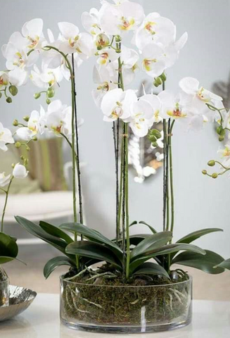 White orchids on display in a glass bowl with roots and leaves showing. Interior design blog about our tips on bringing your kitchen to life without spending too much money. Written by vintage-etc in Cape Town. We make custom made & bespoke tables, benches, free-standing kitchen islands, desks, media units & wardrobes in our Cape Town & Johannesburg workshops – using Oak, Oregon, Ash, Beech, Birch Ply & Meranti. We also sell imported furniture, provide design consulting services & make soft furnishings e.g. sofas & upholstered chairs in linen, velvet & stain resistant fabric.