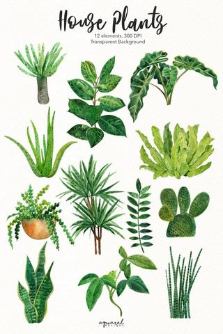 House plant Sketch from Pinterest showing the different types of house plants – e.g. Dragon Tree, Fiddle Leaf Fig Tree, Monstera Deliciosa, Ponytail Palm, Giant Snake Plant etc. Interior design blog about how to turn your home into a luscious urban jungle by bringing in house plants and greenery. Written by vintage-etc in Cape Town. We make custom made & bespoke tables, benches, free-standing kitchen islands, desks, media units & wardrobes in our Cape Town & Johannesburg workshops – using Oak, Oregon, Ash, Beech, Birch Ply & Meranti. We also sell imported furniture, provide design consulting services & make soft furnishings e.g. sofas & upholstered chairs in linen, velvet & stain resistant fabric.