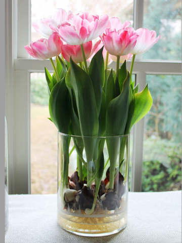 Pink flowers with green leaves in glass pot displaying roots. Interior design blog about our tips on bringing your kitchen to life without spending too much money. Written by vintage-etc in Cape Town. We make custom made & bespoke tables, benches, free-standing kitchen islands, desks, media units & wardrobes in our Cape Town & Johannesburg workshops – using Oak, Oregon, Ash, Beech, Birch Ply & Meranti. We also sell imported furniture, provide design consulting services & make soft furnishings e.g. sofas & upholstered chairs in linen, velvet & stain resistant fabric.