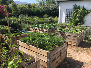 Vegetable Garden Grow Box (made from re-purposed apple crates)