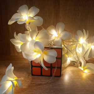 Tropical Nights Floral delights, Frangipani LED String Lights - Garden Gift Hub