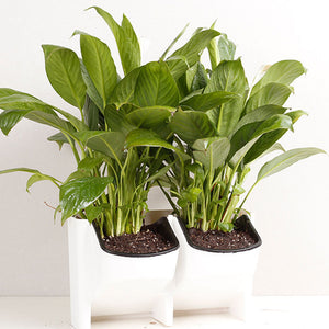 Show Off a Green Living Wall or Windowsill with Hanging Stackable Plastic Planter Flower Pots - Garden Gift Hub
