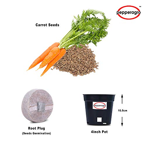Combo Pack Of Carrot Seeds / Root Plug / 4Inch Pot