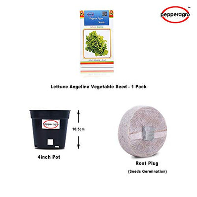 Lettuce Angelina Vegetable Seed 1 Pack Comes With Free Pot & Root Plug