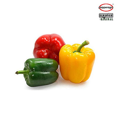 Combo Pack Of Capsicum F1 Seeds With Free Root Plug & 4Inch Pot | Buy Online