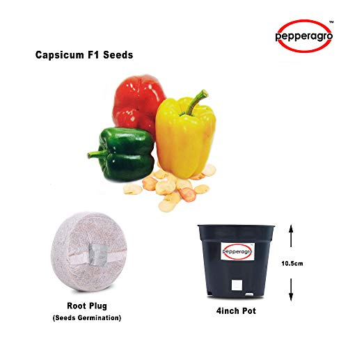 Combo Pack Of Multiple Colors Capsicum F1 Seeds With Free Root Plug & 4Inch Pot | Buy Online