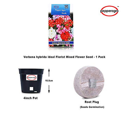 Verbena hybrida Ideal Florist Mixed Flower Seeds 1 Pack Comes With Free Pot & Root Plug Combo