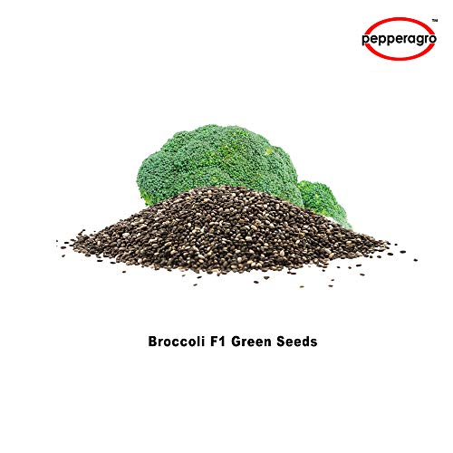 Combo Pack Of Broccoli F1 Green Giant Seeds / Root Plug / 4Inch Pot