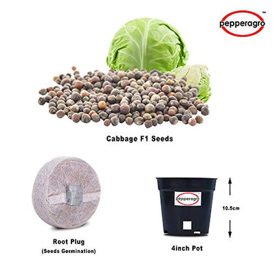 Combo Pack Of Cabbage F1 Seeds / Root Plug / 4Inch Pot - One Quantity