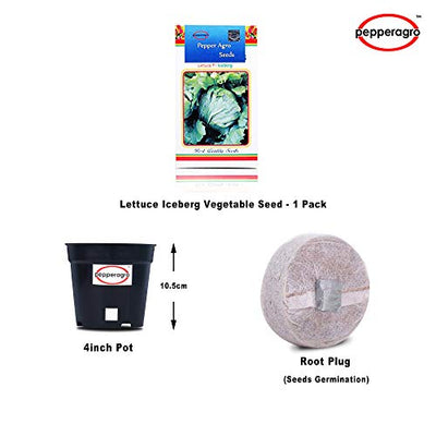Lettuce Iceberg Vegetable Seeds 1 Pack Comes With Free Pot & Root Plug | Buy Online