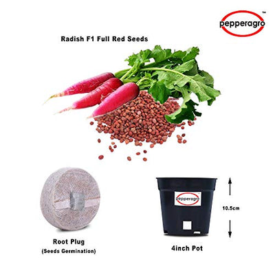 Combo Pack Of Radish F1 Seeds With Free Root Plug & 4Inch Pot | Buy Online