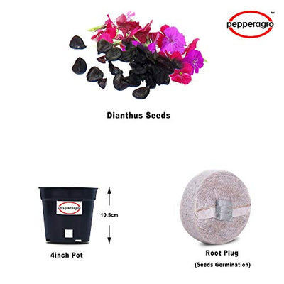 Combo Pack Of Dianthus Baby Doll Mixed Seeds / Root Plug / 4Inch Pot | Buy Online