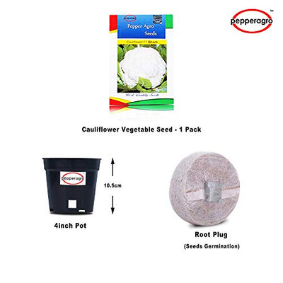 Cauliflower Vegetable Seeds 1 Pack Comes With Free Pot & Root Plug | Buy Online