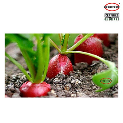Combo Pack Of Radish Round Red Seeds / Root Plug / 4Inch Pot | Buy Online