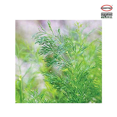 Combo Pack Of Dill Seeds Pack 1  With Root Plug & 4Inch Pot | Shop online