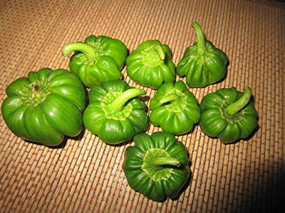 Capsicum Vegetable Seeds 1 Pack Comes With Free Pot & Root Plug Combo