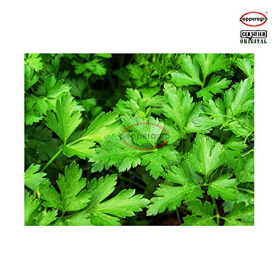 Combo Pack Of Parsley F1 Seeds / Root Plug / 4Inch Pot | Shop Now Online