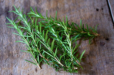 Rosemary Herbs Seed 1 Pack Comes With Free Pot & Root Plug | Buy Online