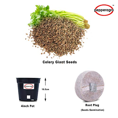 Pepper Agro Celery Giant Pascal Vegetable seeds 2 packs