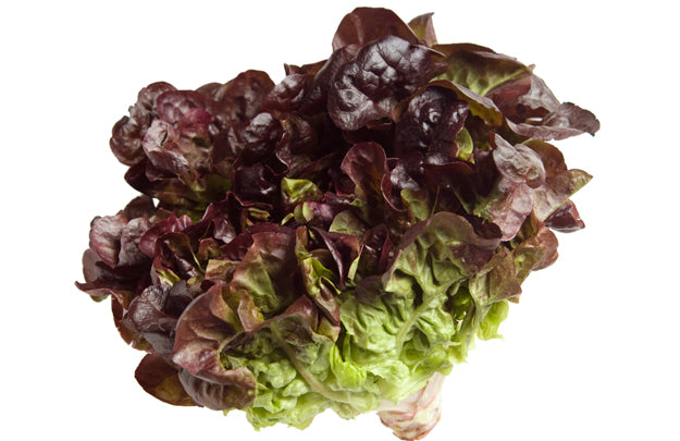 Lettuce Red Grand Vegetables Seed 1 Pack Comes With Free Pot & Root Plug Combo