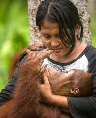 BOSF worker  in Indonesia caring for Jumbo, the orangutan