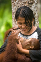 Coming Up - Caring for endangered orangutans